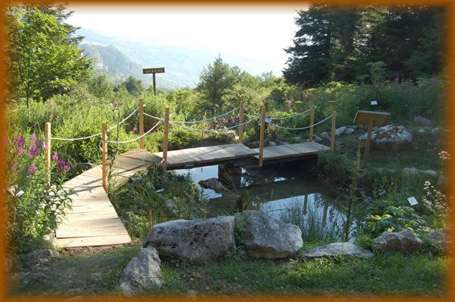 Giardino della flora appenninica pro loco capracotta for Stagno giardino